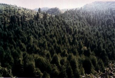 茂云山国家森林公园