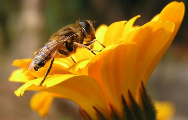 蜜蜂小品垃圾桶