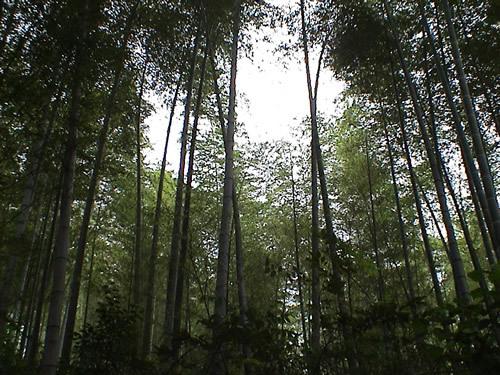 青山竹海――濮塘自然风景区